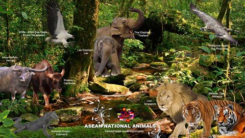National animals of different countries